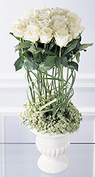 Behavior Arrangement - Design Fresh Cut Flowers